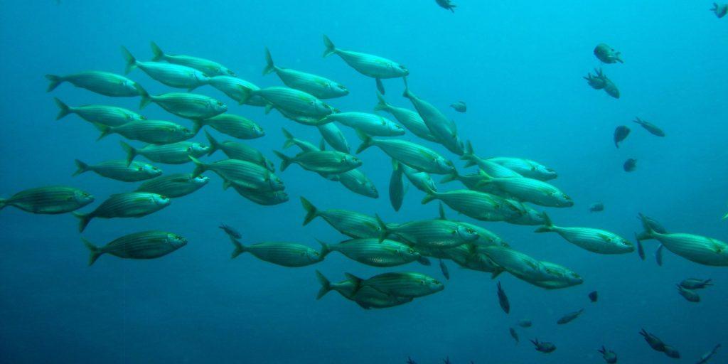 school of fish, fish, nature
